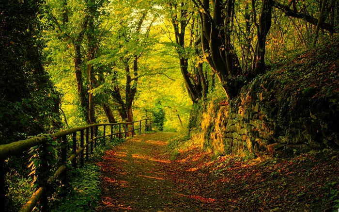 forest road-forest landscape desktop wallpaper Views:17984