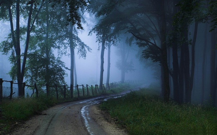 misty road-forest landscape desktop wallpaper Views:15562