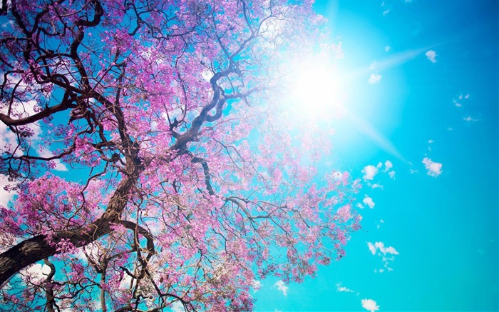 spring sunshine-beauty spring desktop wallpaper Views:51112