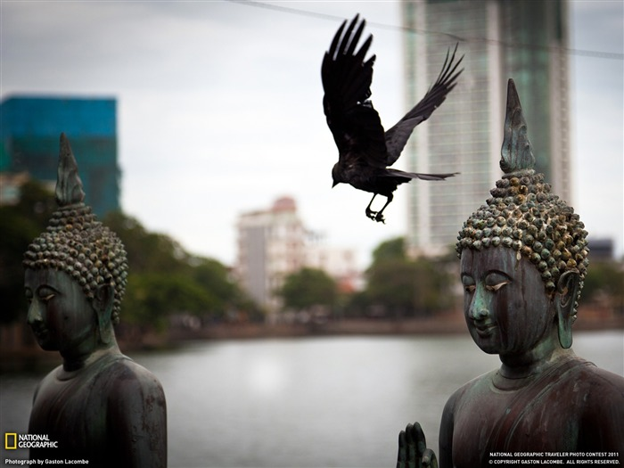 Buddhas and Bird Sri Lanka-National Geographic Travel Photos Views:5004