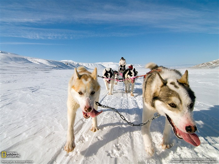 Dog Sled Norway-National Geographic Travel Photos Views:4496