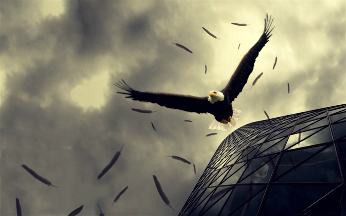 bald eagle flying-Photoshop Creative Design picture Views:7591