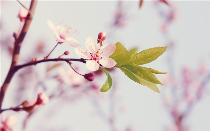 Spring arrival of when-spring theme Desktop wallpaper Views:11547