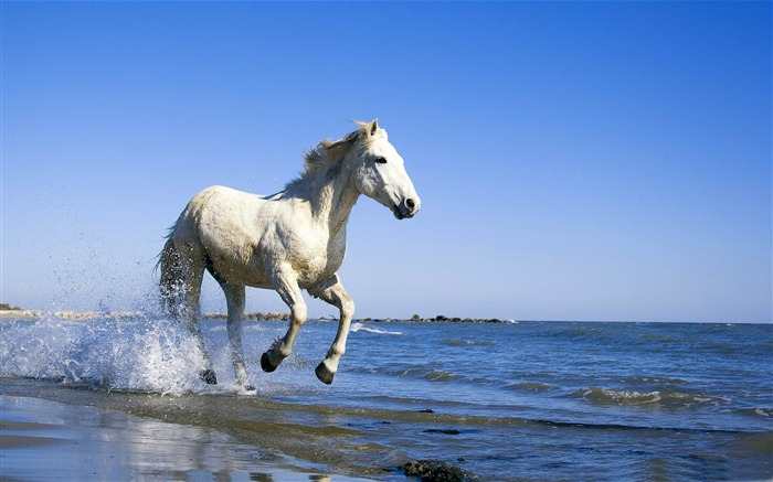Ferghana horse-Amazing Horse theme wallpaper Views:14818