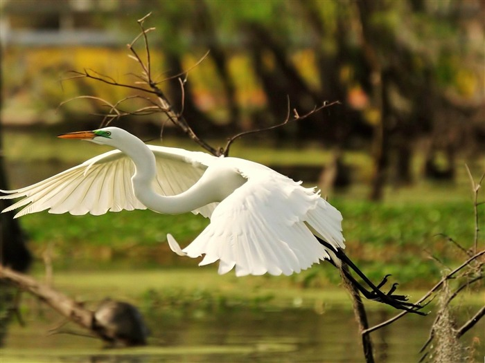 Beautiful bird photography wallpaper Views:10311