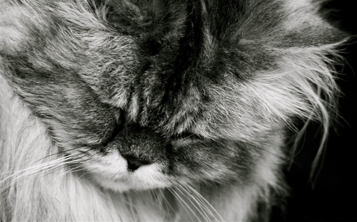 伤心的猫-可爱的宠物猫咪桌面图片