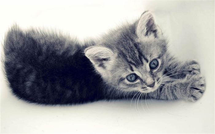 甜蜜的小猫-可爱的宠物猫咪桌面图片
