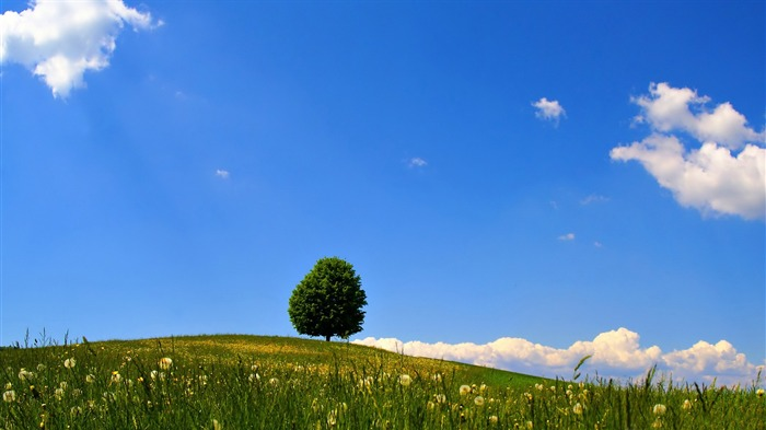 lonely tree-beautiful natural landscape wallpaper Views:5434