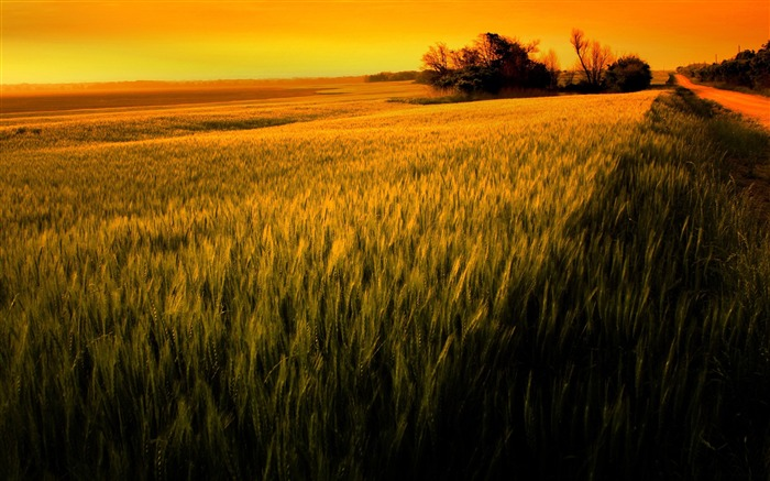 sunset over wheat field-beautiful natural landscape wallpaper Views:14136
