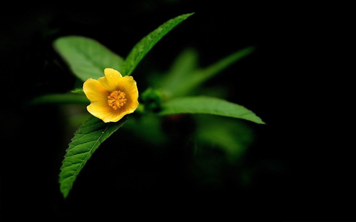 yellow flowers-flowers photography wallpaper Views:3962