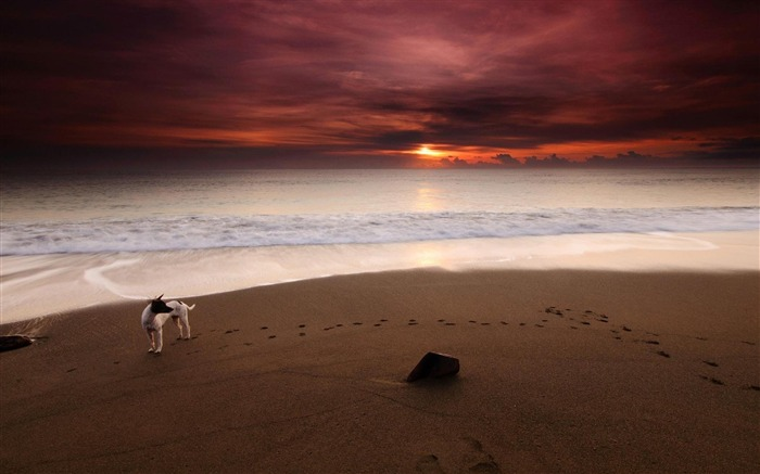 Dog on Sunset Sea-Nature Scenery Wallpaper Views:6375