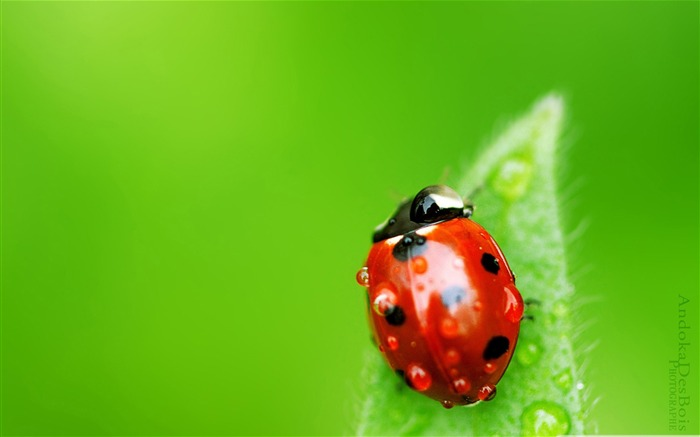 small world-all kinds of insects wallpaper album Views:9454
