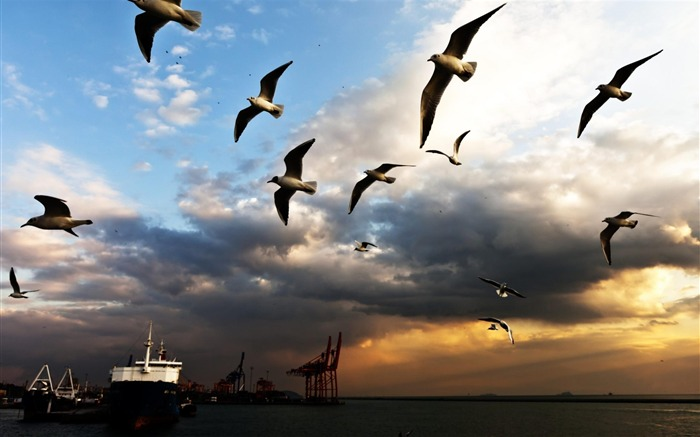 Seagull Bird Clouds-Nature Scenery Wallpaper Views:6663