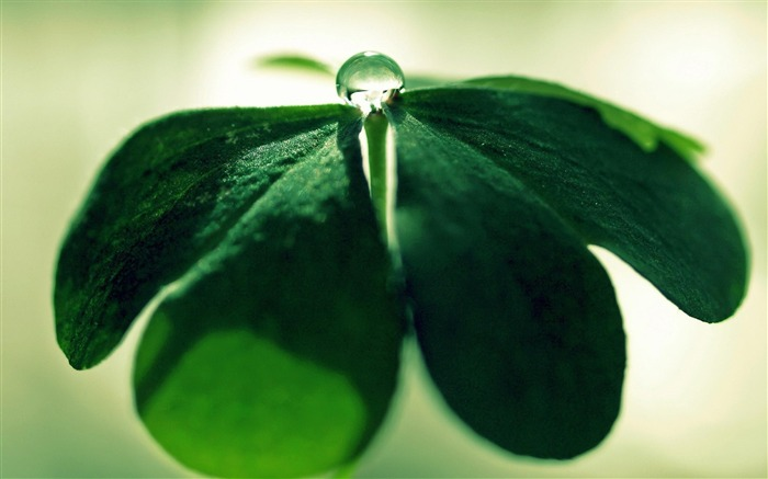 Water drops on green leaves-Plant macro photography wallpaper Views:3347