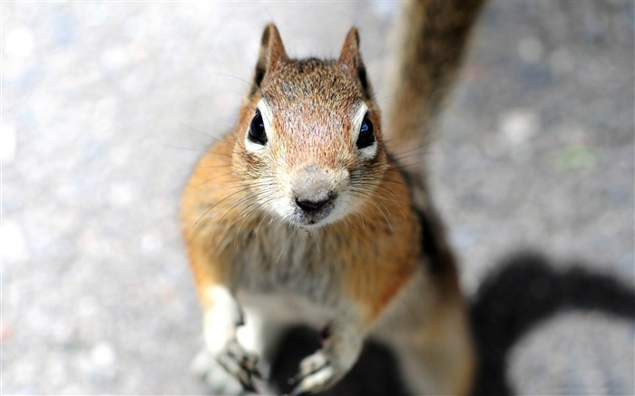 a squirrels face-Wild Animal HD Wallpapers Views:11699
