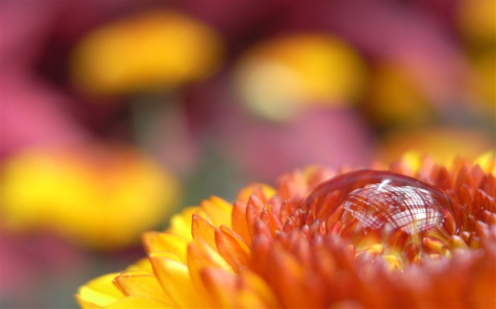autumn drop-flower macro photography Wallpapers Views:13954