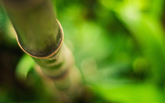 bamboo-Plant macro photography wallpaper Views:6584