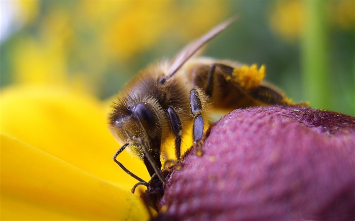 bee and flower-all kinds of insects wallpaper Views:5124