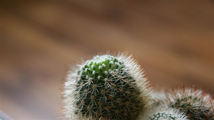 cactus-Plants photography HD wallpaper Views:6051 Date:4/15/2012 8:31:39 PM