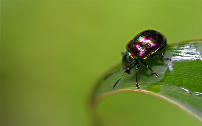 colorful bug-all kinds of insects wallpaper Views:5410
