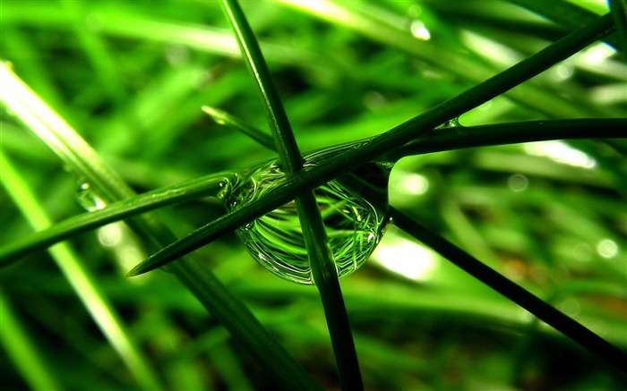 fresh green grass-Plant macro photography wallpaper Views:5575