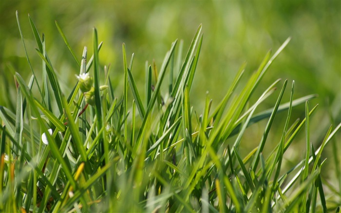 grass -Macro photography wallpaper Views:5268 Date:4/19/2012 11:27:27 PM