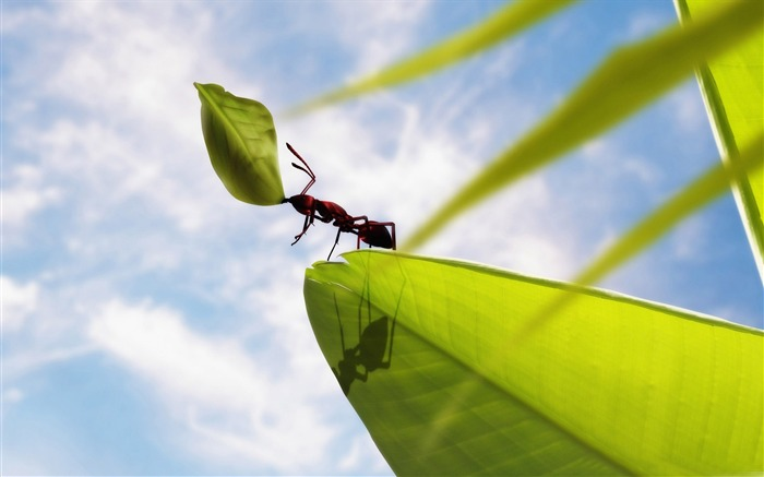 hardworking ant-all kinds of insects wallpaper Views:6534