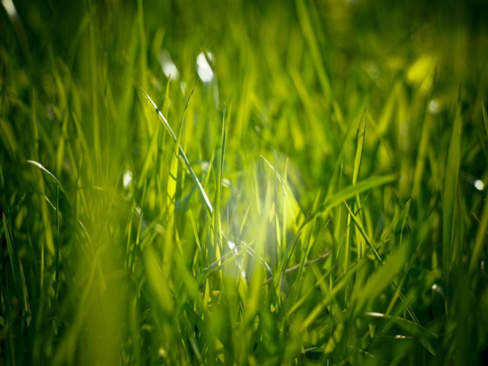 i love grass-Plants photography HD wallpaper Views:4988 Date:4/15/2012 8:37:01 PM