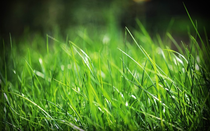 just grass-Plants photography HD wallpaper Views:9407 Date:4/15/2012 8:37:43 PM