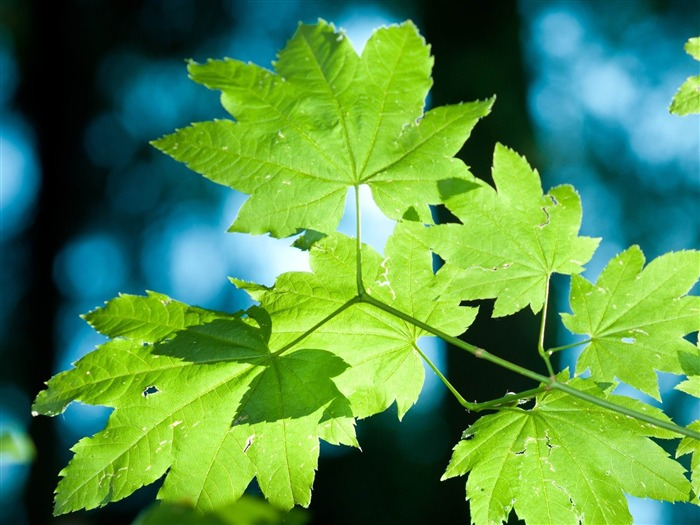 leaves-Plants photography HD wallpaper Views:5529 Date:4/15/2012 8:39:07 PM