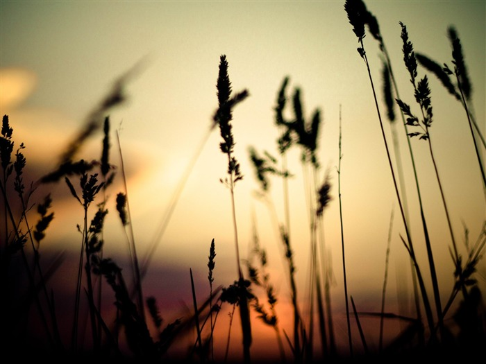 plants in the sunset-Plants photography HD wallpaper Views:5957 Date:4/15/2012 8:42:50 PM