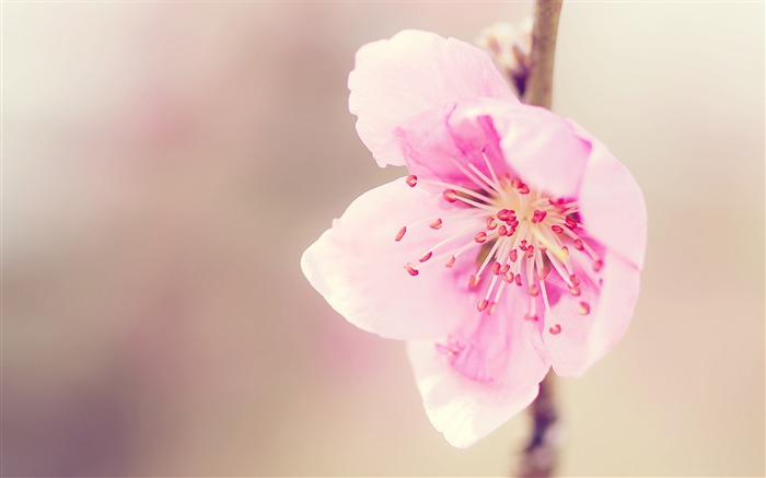 pretty pink flower-flower macro photography Wallpapers Views:8468