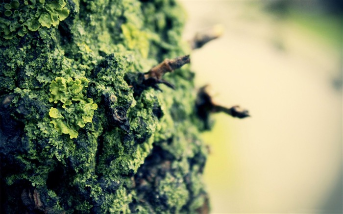 rock lichens-Macro photography wallpaper Views:6410 Date:4/19/2012 11:30:54 PM