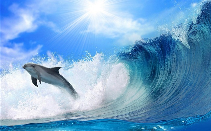 Dolphin jump-Animal photography wallpaper Views:17023