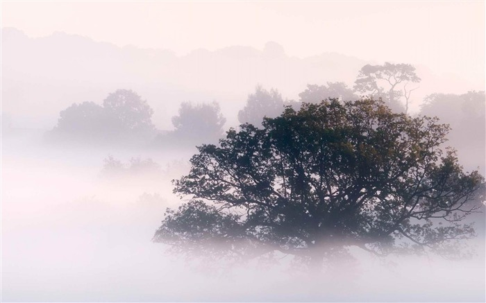 Early morning fog-Landscape photography wallpaper Views:4900