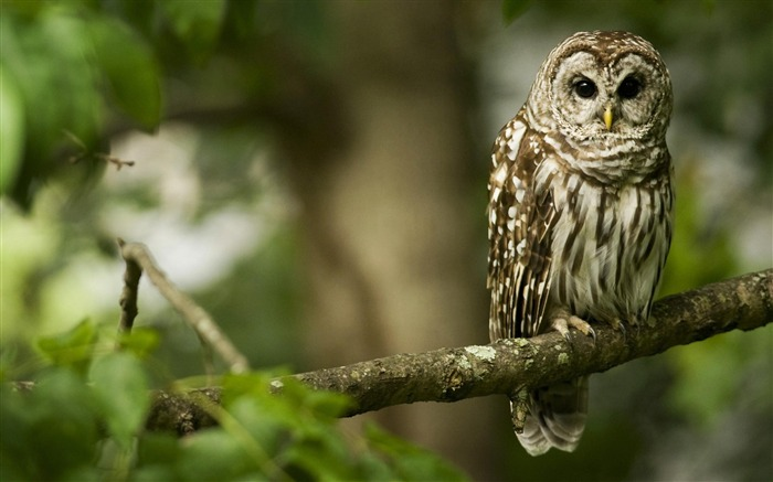Owl-Animal photography wallpaper Views:8845