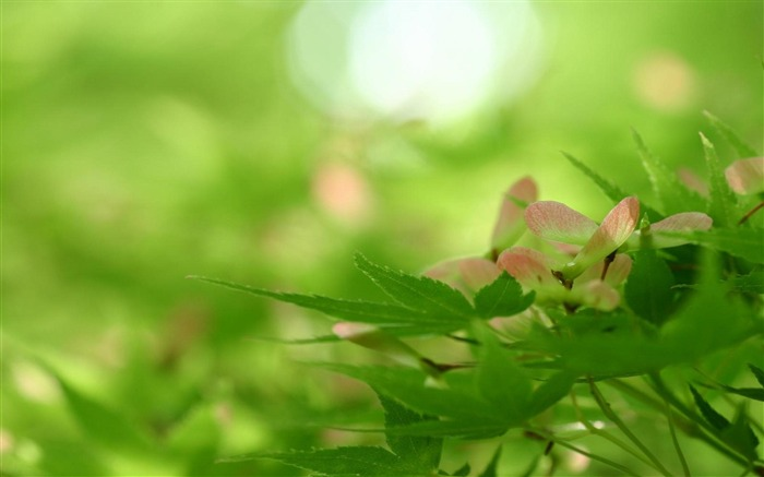 Spring Green Leaf-natural plant wallpaper Views:10259