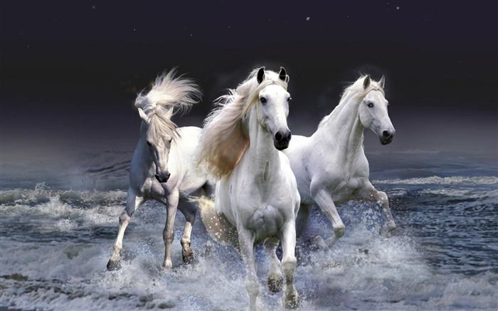 White horses-Animal photography wallpaper Views:5403