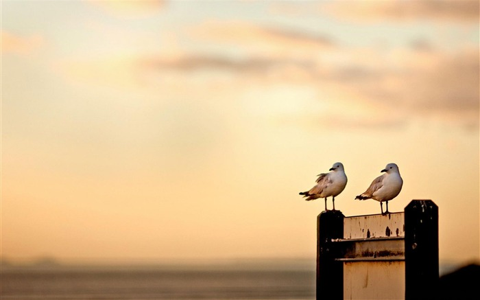 a pair of seagulls-Animal photography wallpaper Views:5753