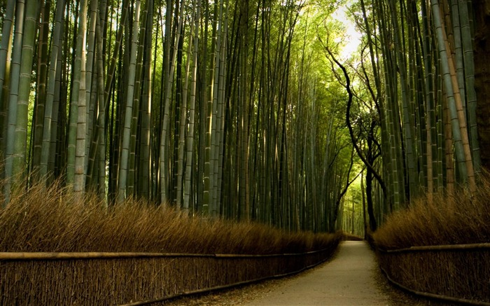 bamboo forest-High Quality wallpaper Views:26384