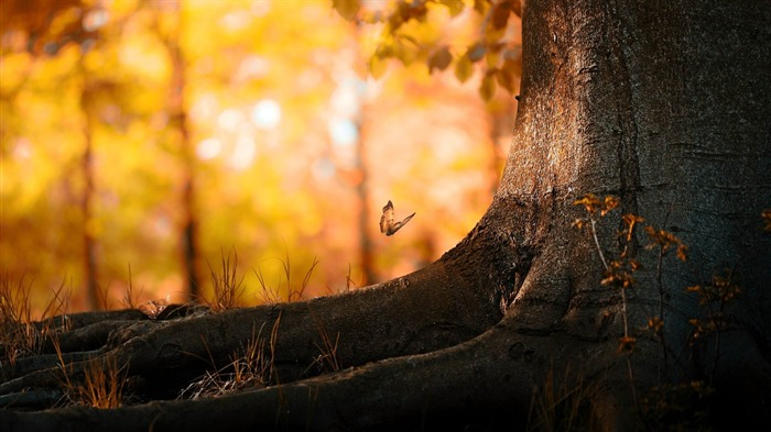 butterfly wood-Natural landscape wallpaper Views:3890