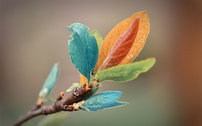 colorful leaves-natural plant wallpaper Views:5045