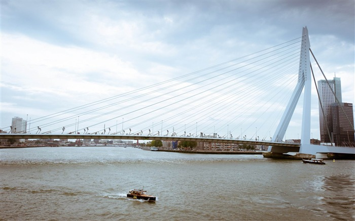 erasmus bridge rotterdam-Netherlands Landscape Wallpaper Views:8308 Date:5/21/2012 10:15:18 PM
