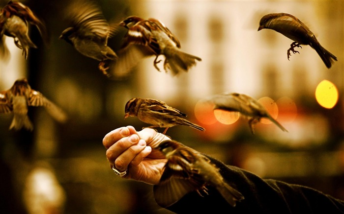 feed the birds-High Quality wallpaper Views:5711