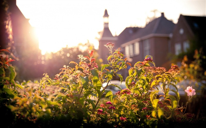 flowers and sunset-Netherlands Landscape Wallpaper Views:9735 Date:5/21/2012 10:16:03 PM