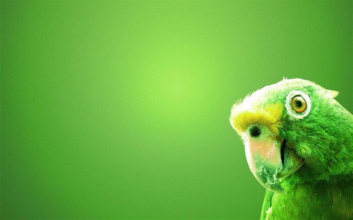 green parrot-Animal photography wallpaper Views:6172