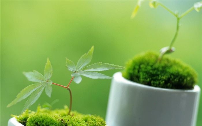 green plant-natural plant wallpaper Views:5734