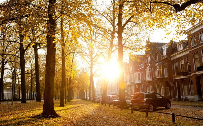 sunny autumn afternoon in utrecht-Netherlands Landscape Wallpaper Views:17607 Date:5/21/2012 10:25:20 PM