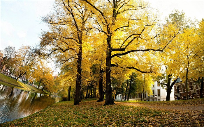 yellow trees sunny autumn-Netherlands Landscape Wallpaper Views:10660 Date:5/21/2012 10:29:34 PM