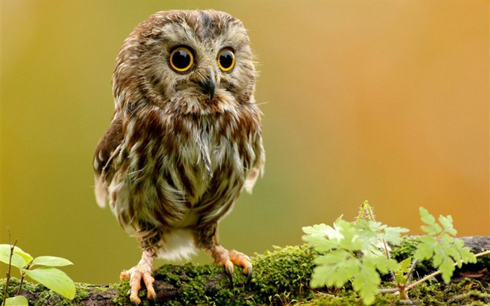cute owl-Animal photography wallpaper Views:13957